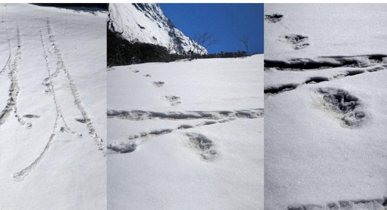 मकालुमा हिममानव (यती) रहेको अनुमान, भारतीय सेनाले खिच्यो पाइलाको तस्बिर